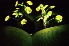 plante lumineuse