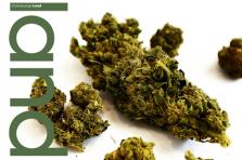 Dans ce numéro, le Land revient sur la légalisation du cannabis récréatif au Luxembourg.