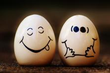 œufs Fipronil