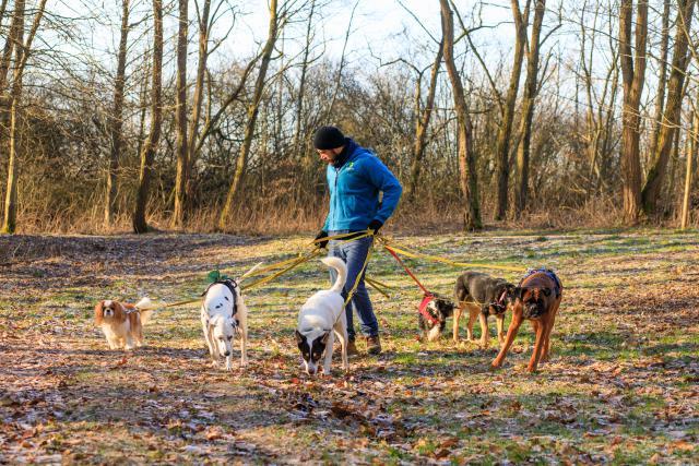 Dogwalker – La société qui propose de promener les chiens emploie 13 personnes.