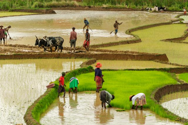 Le Fonds d'investissement pour l'entrepreneuriat agricole vise à fournir aux agriculteurs dans les milieux ruraux défavorisés les financements dont ils auront besoin.